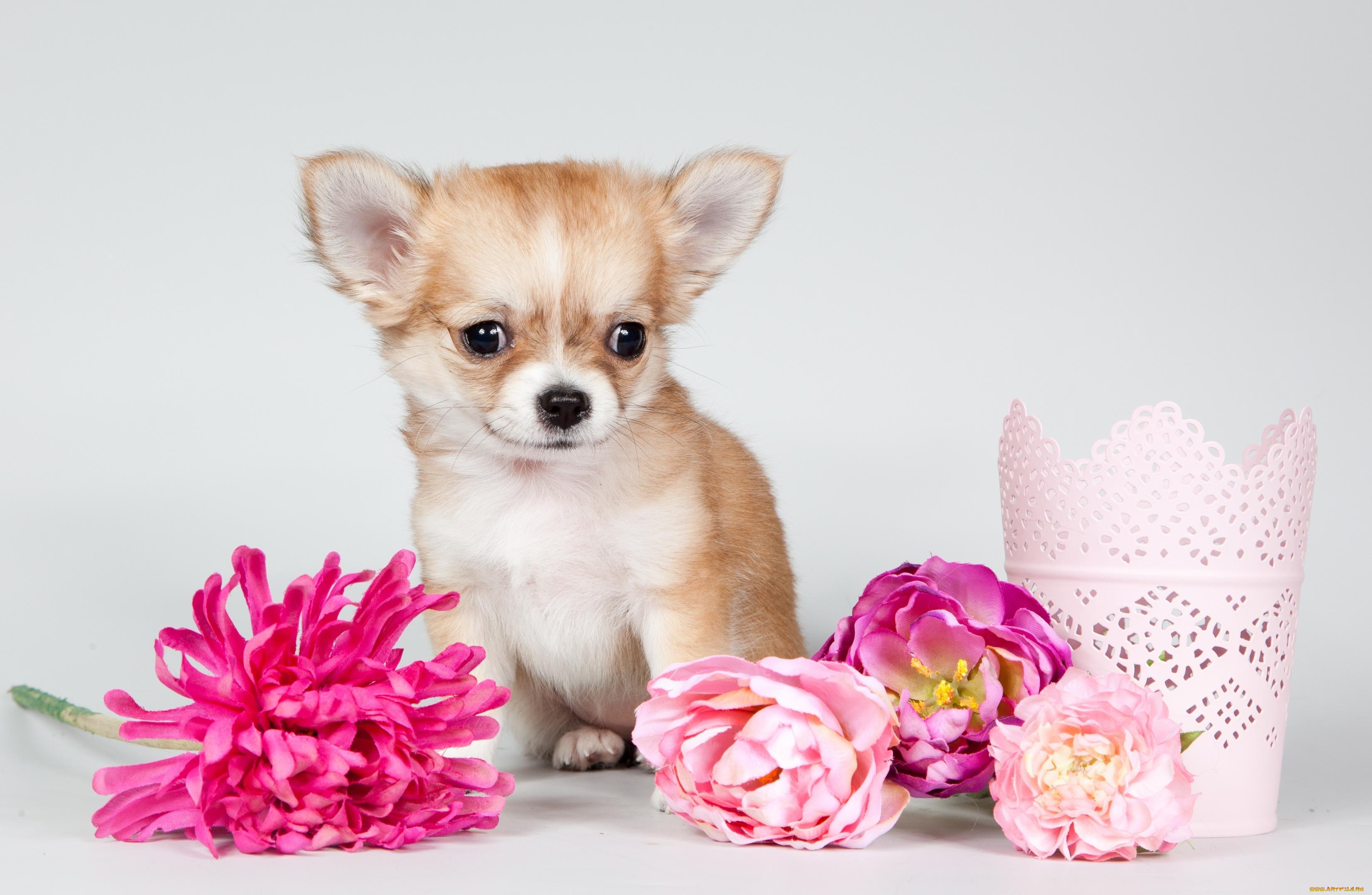 Открытки с маленькими собаками