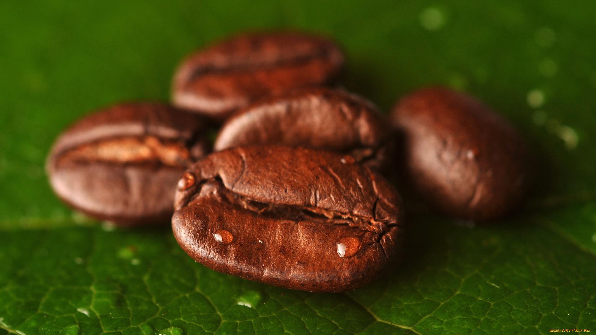 Кофейные зерна с листьями бесплатно