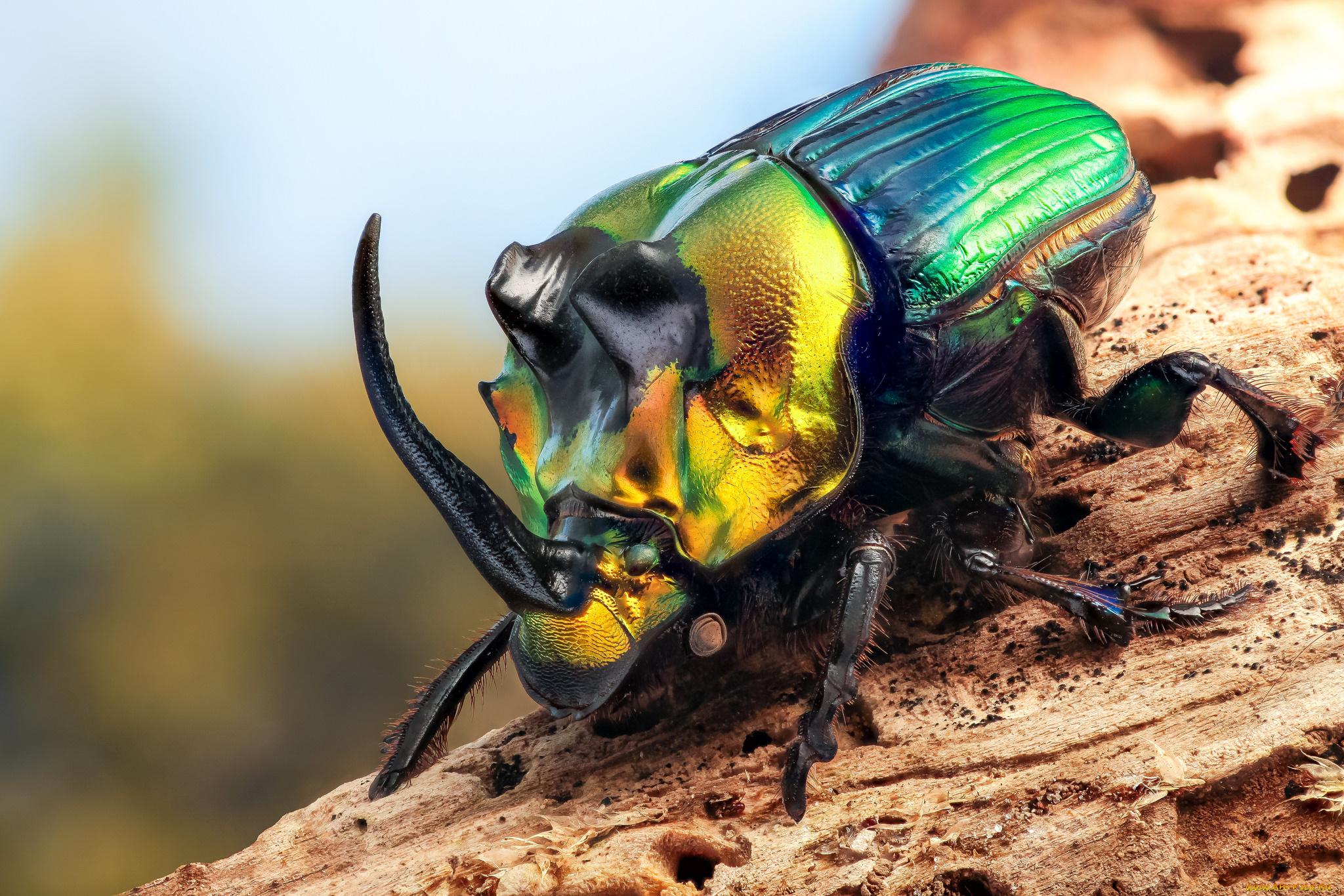 Скрапбукинг, красивые насекомые картинки