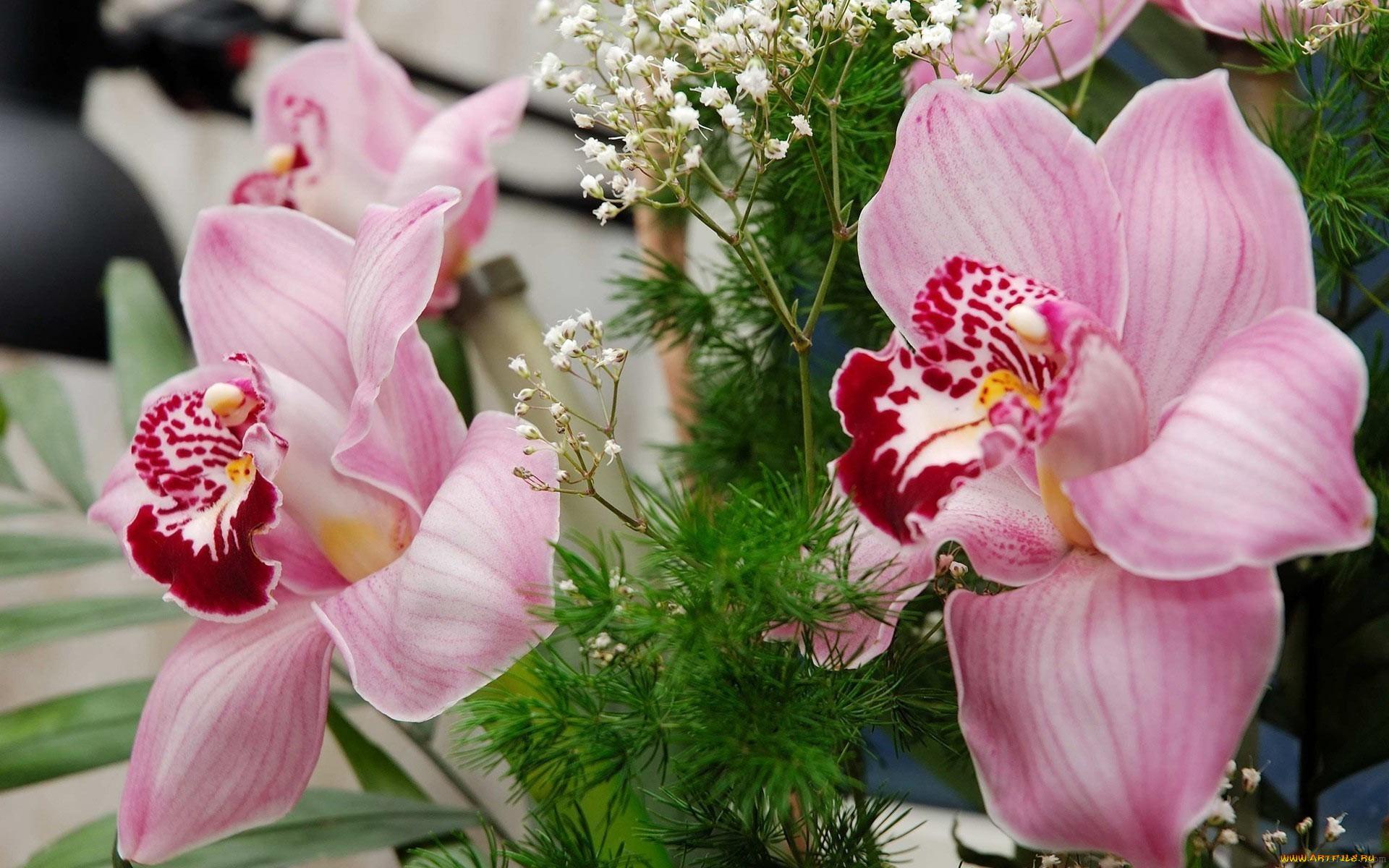 Орхидеи открытки фото