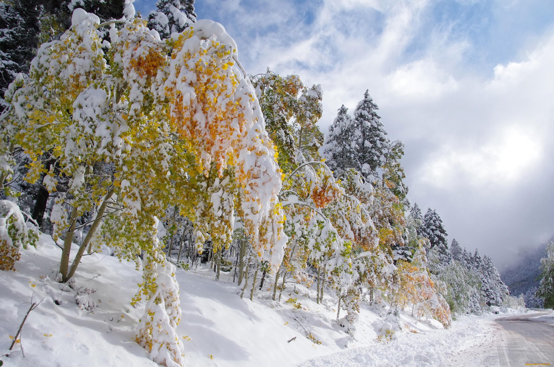 снег деревья желтые  № 442269  скачать