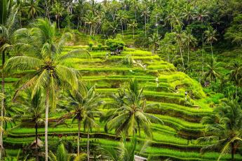Картинка природа тропики пальмы зелень