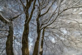 Картинка природа зима деревья снег ветки