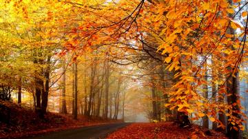 Картинка природа дороги дорога лес осень