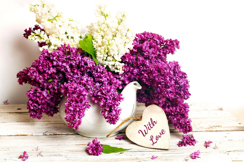 Сирень цветы открытки