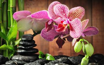 Картинка цветы орхидеи камни капли