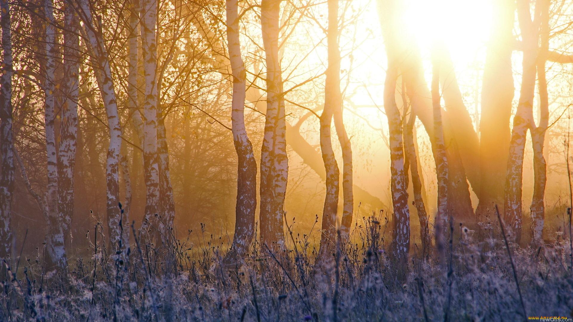 Снег, лучи, солнце, лес, ели скачать