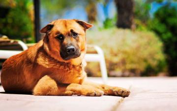 Картинка животные собаки взгляд