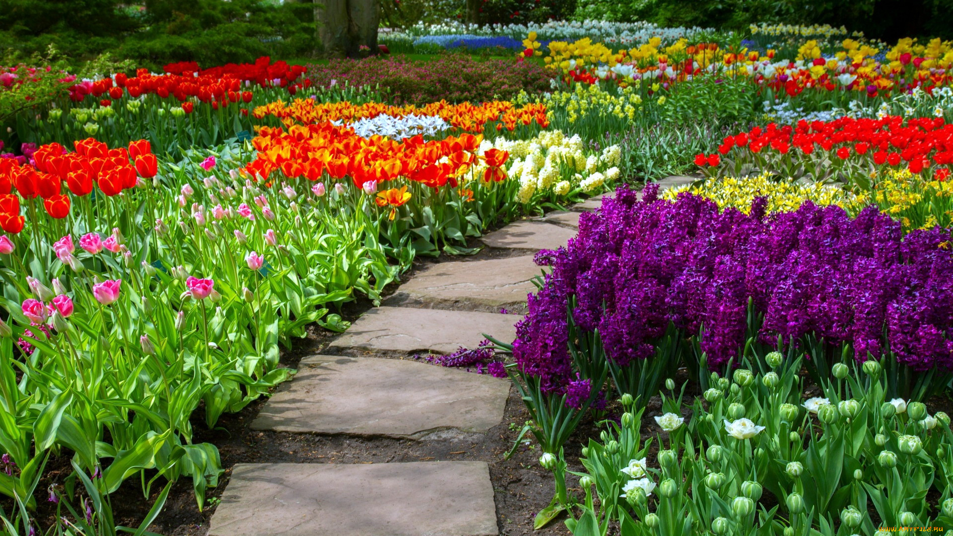 Клумба из тюльпанов своими руками на даче фото 86