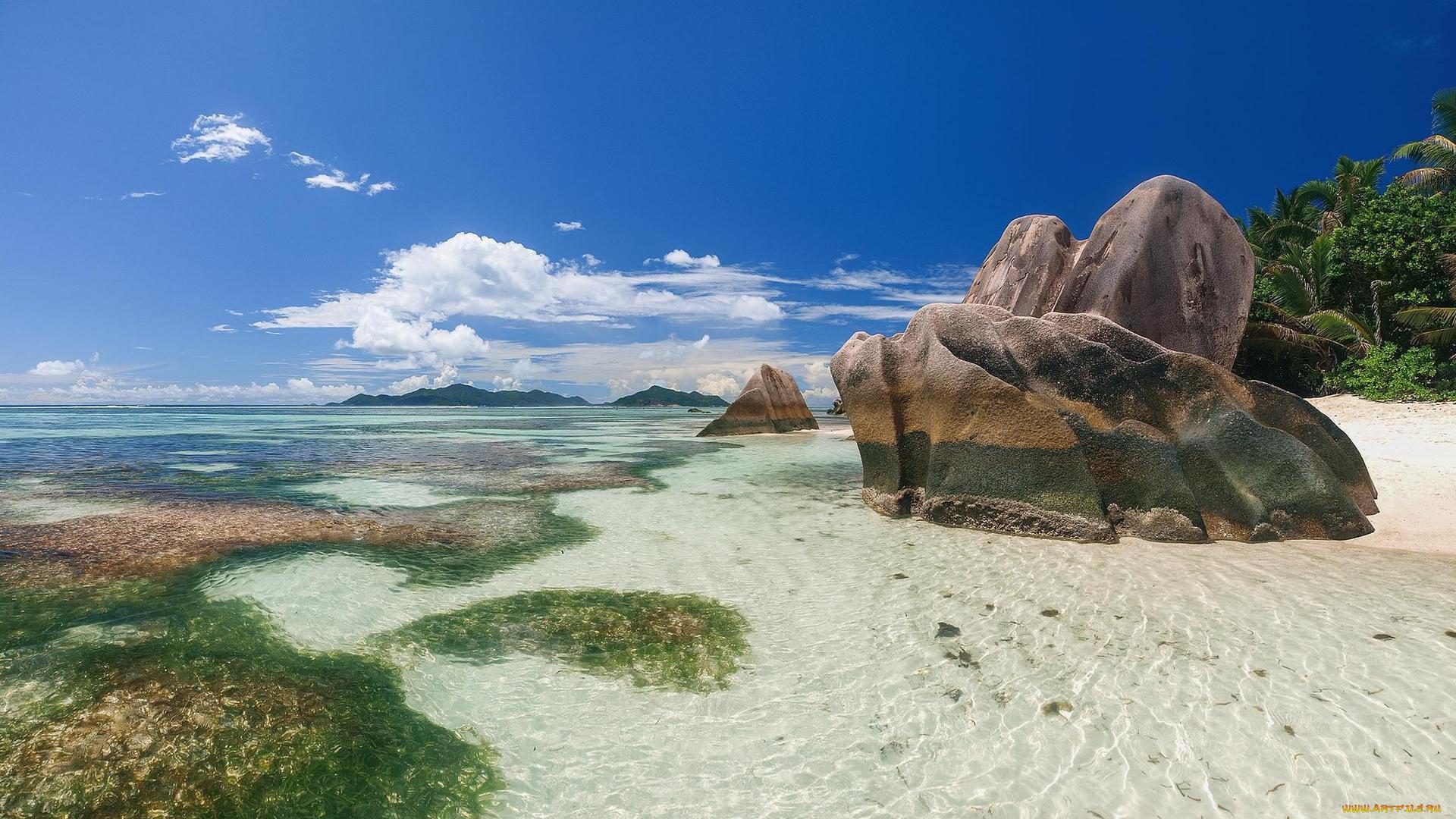 берег камни пальмы shore stones palm trees загрузить