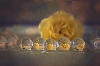 обоя разное, капли,  брызги,  всплески, отражение, макро, роза, желтая, пузыри