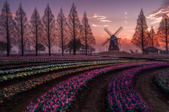 обоя разное, мельницы, весна, цветы, тюльпаны