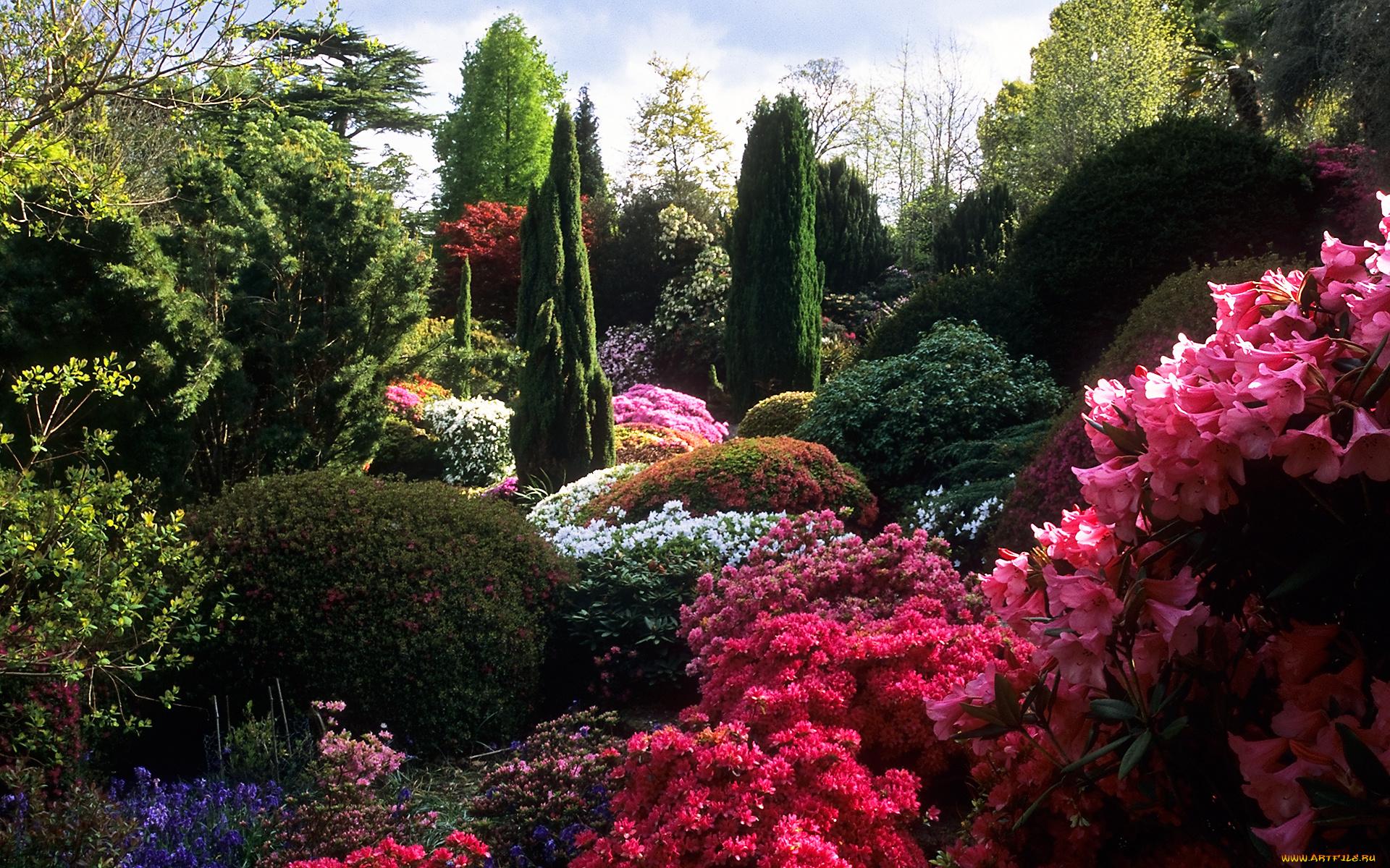 Обои на рабочий стол большие сады мира самые красивые