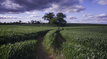 Картинка природа поля колея трава поле