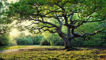 большое дерево  № 1647853 загрузить