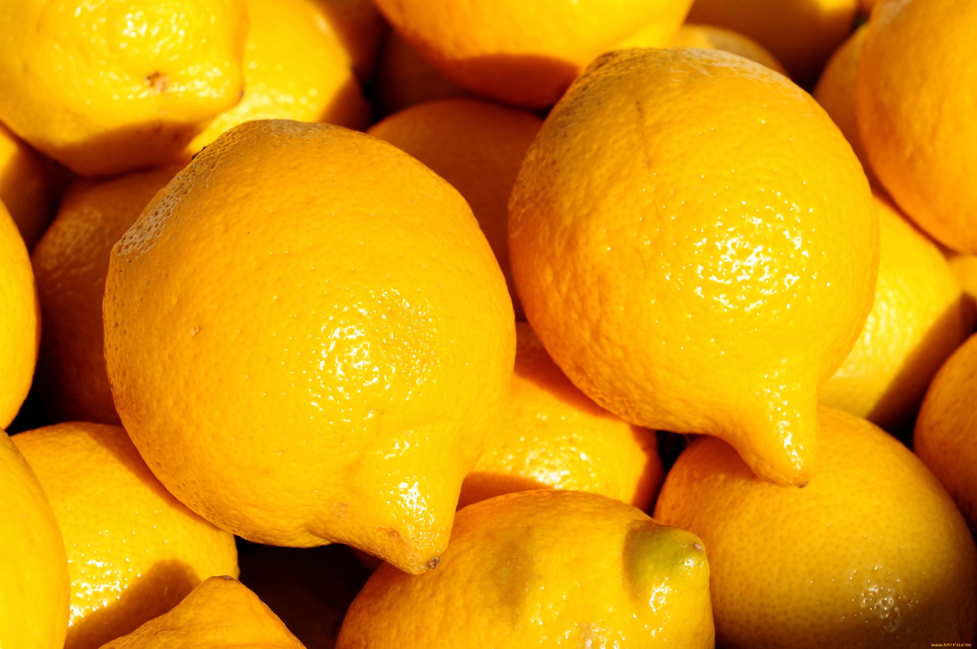 Картинка с лимонами на заставку