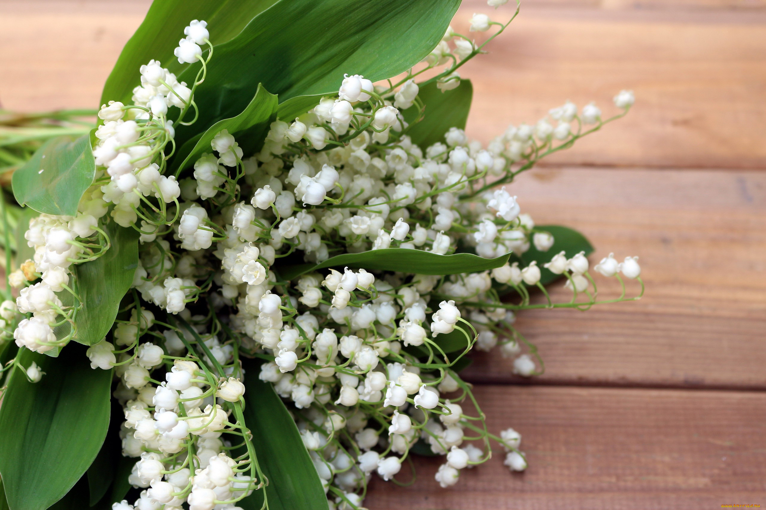 Цветы ландыши картинки фото