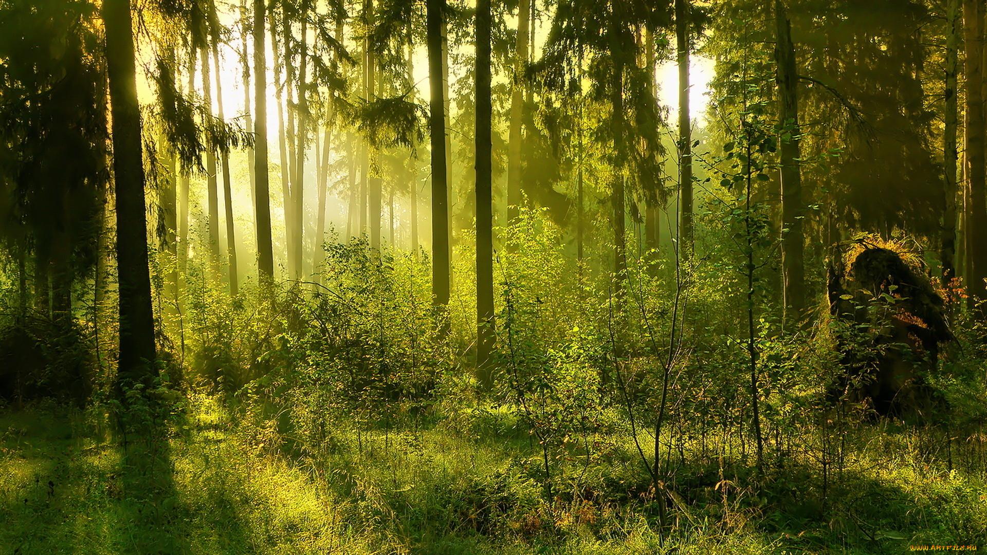 Открытки лес природа, открытки словами благодарности