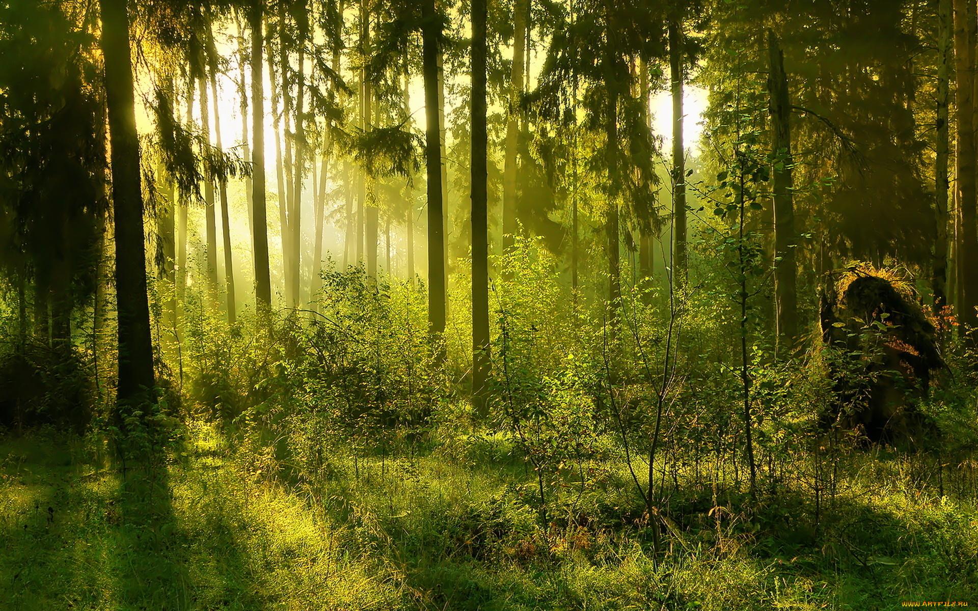 лучи лес дорога лето зелень rays forest road summer greens загрузить
