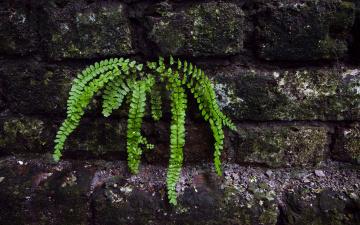 Картинка fern природа листья стена папоротник обувь