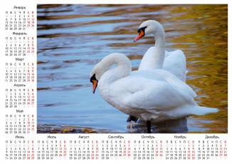 Картинка календари животные лебеди календарь