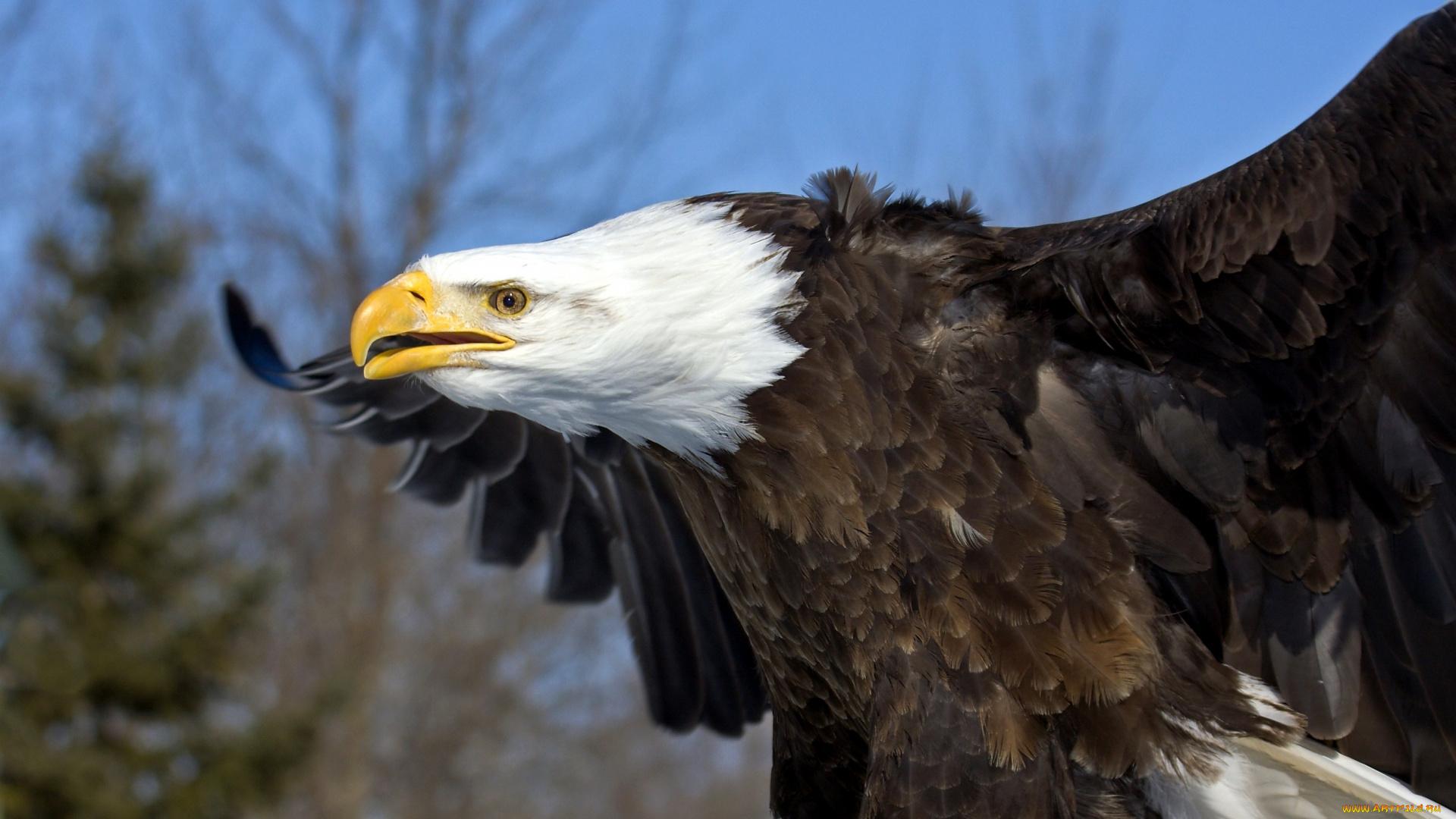 Самая крупная хишняя птица