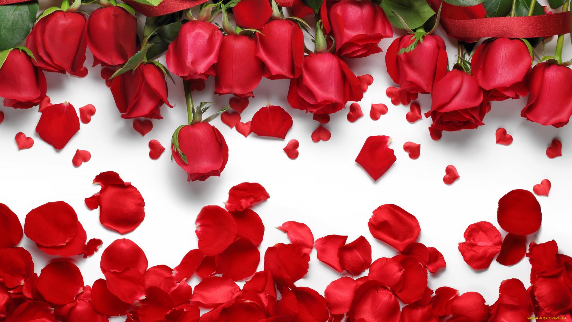 любовь сердца лепестки love heart petals на телефон