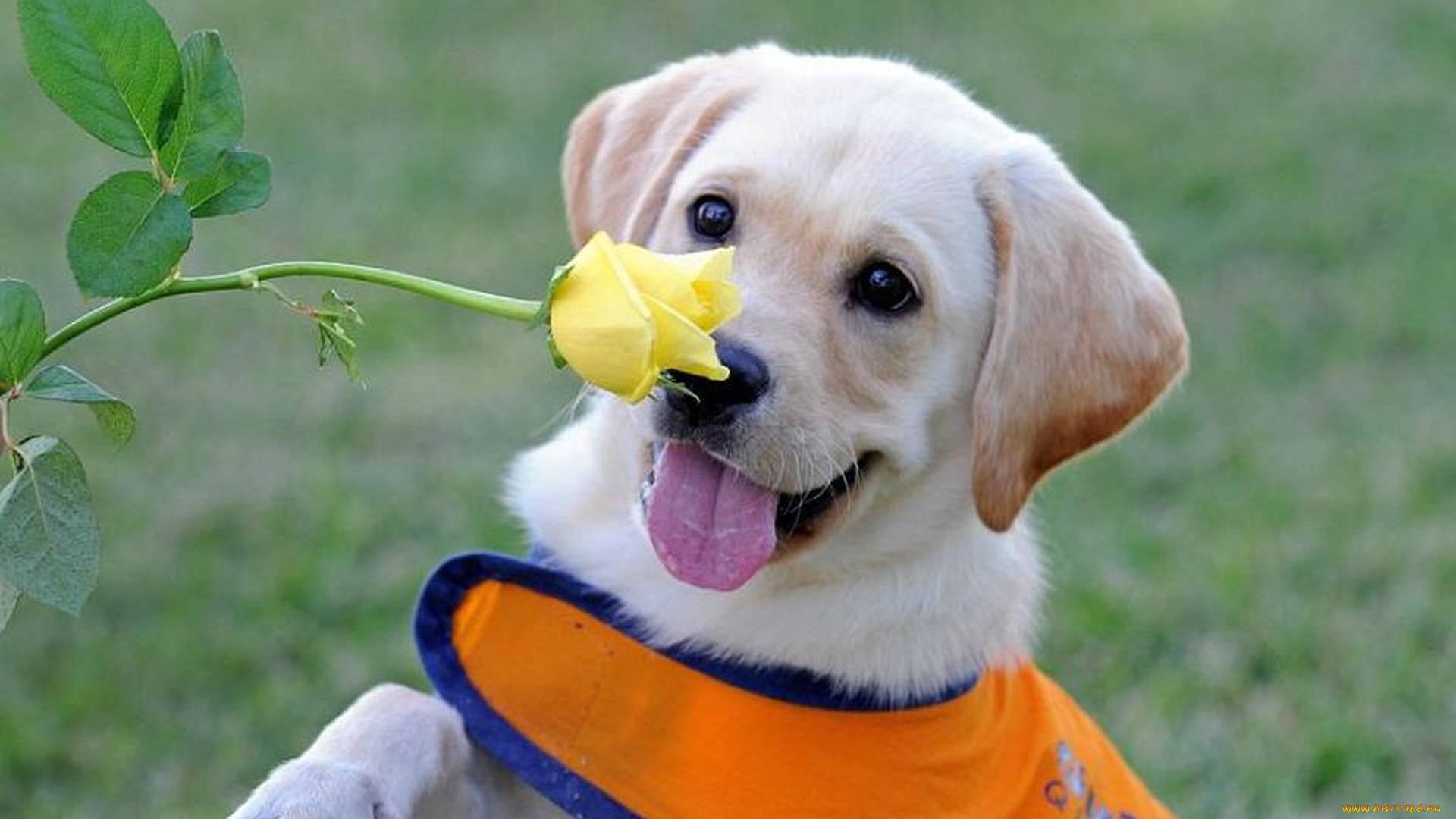 Деловой стиль, смешные животные фото собаки