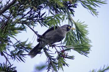 Картинка животные птицы ветки листья птица