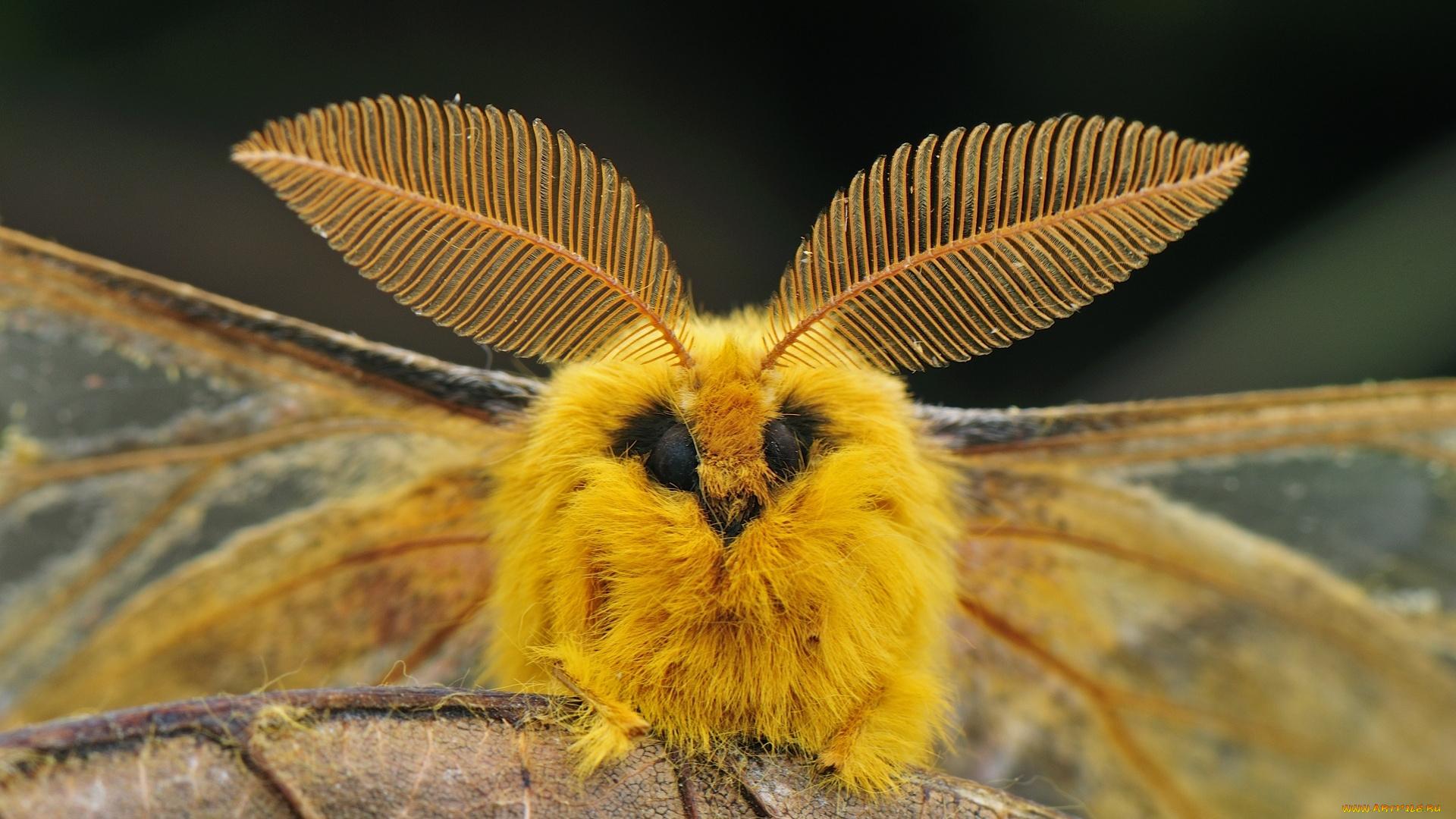 Картинки хищника, смешные бабочки фото