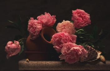 обоя цветы, пионы, кувшин, ракушки