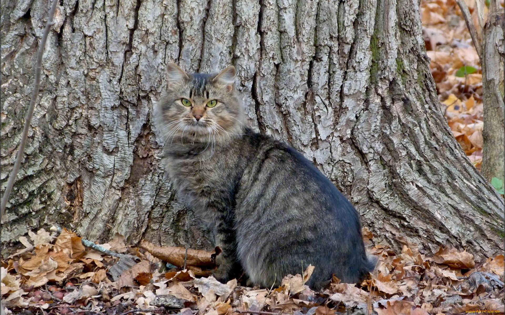 котик возле дерева без смс