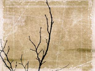 Картинка голые ветки рисованные природа почки дерево фон