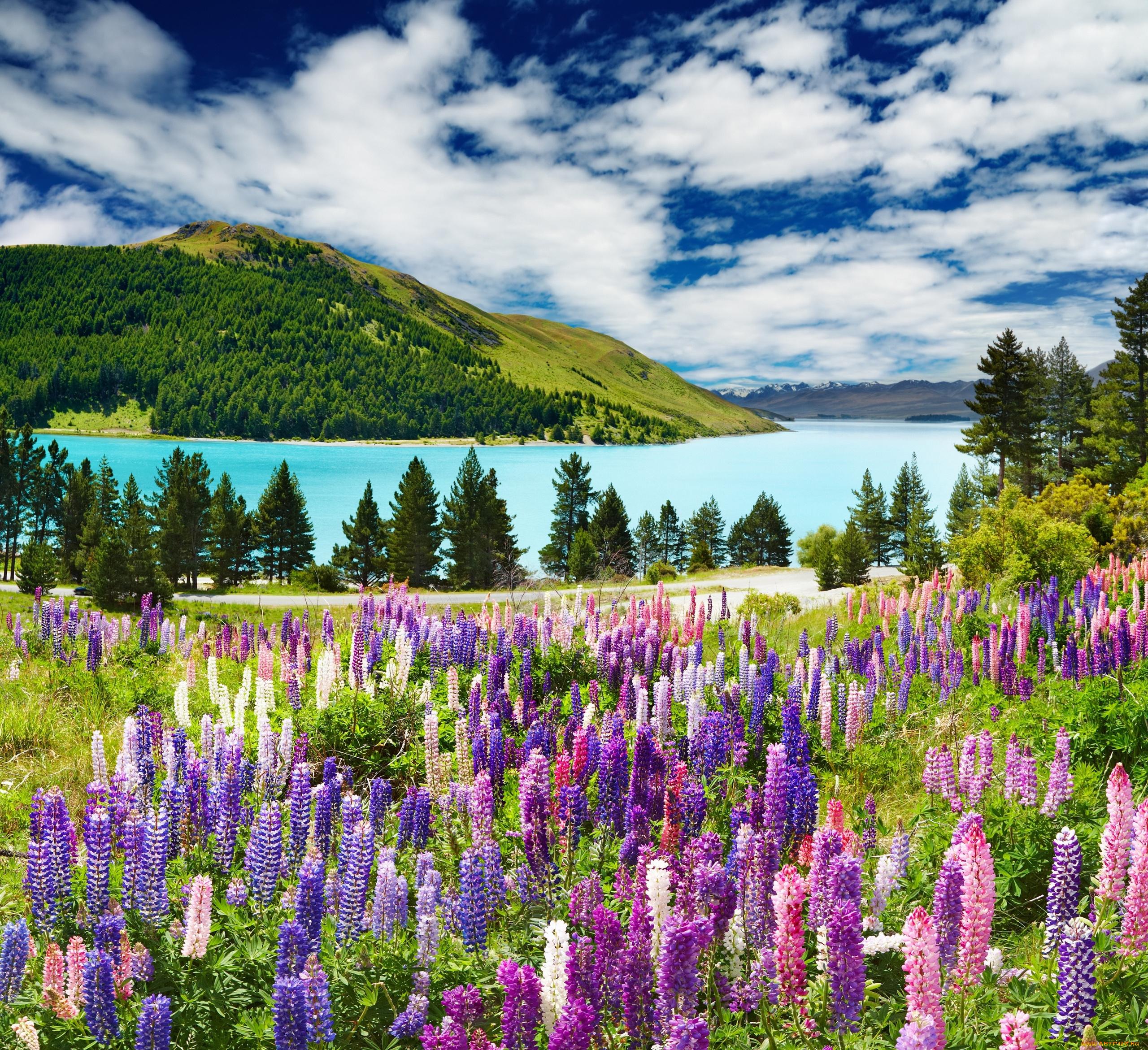 Облака, трава, цветы, озеро  № 1963048 загрузить