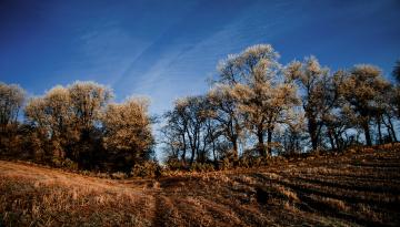 Картинка природа деревья облака небо поле