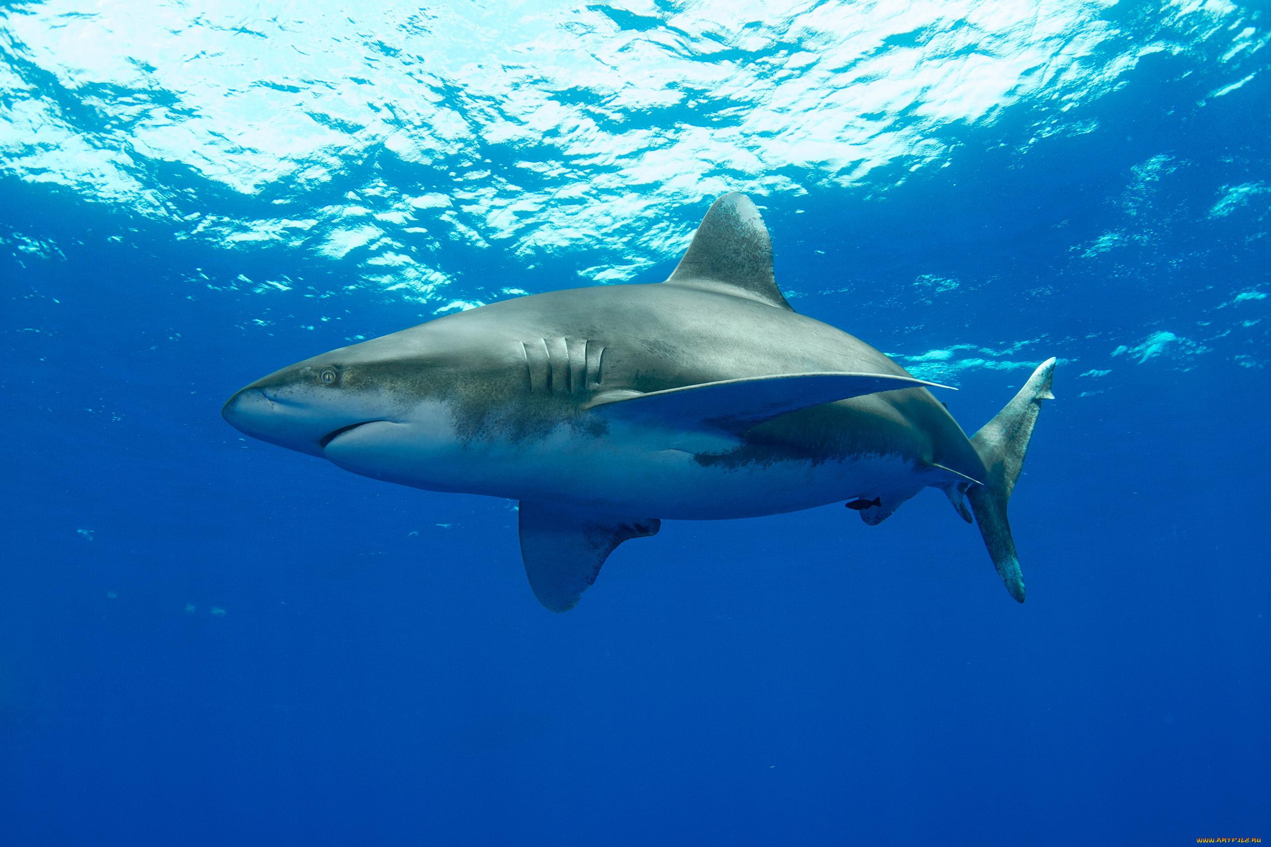 Картинка с акулой, красивые открытки гифки