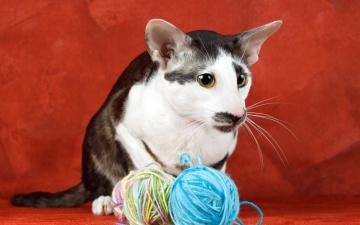 Картинка животные коты нити кошка фон