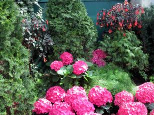обоя цветы, разные вместе, туя, гортензия