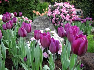 обоя цветы, разные вместе, тюльпаны, рододендрон