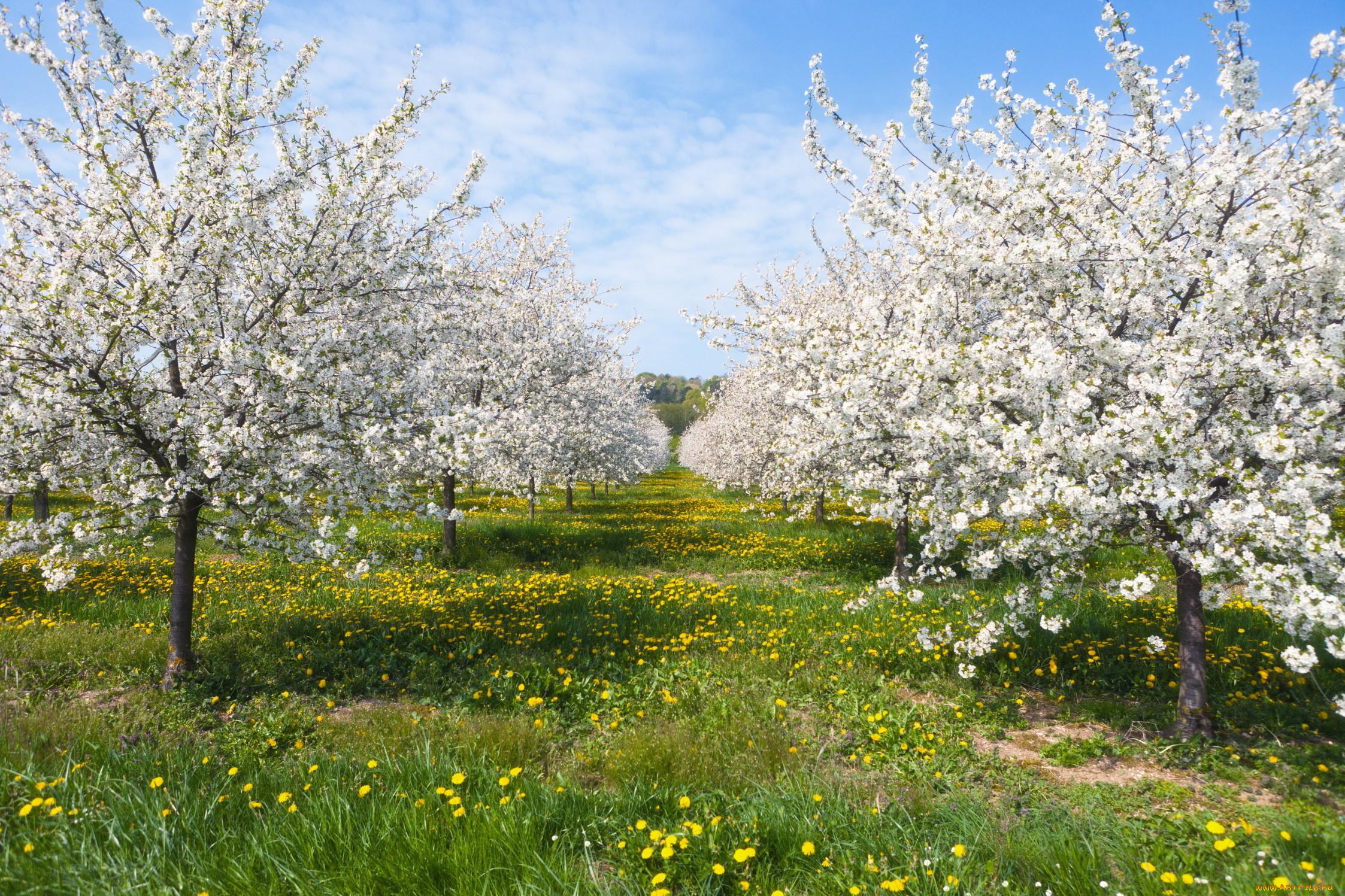 Картинки цветущих садов