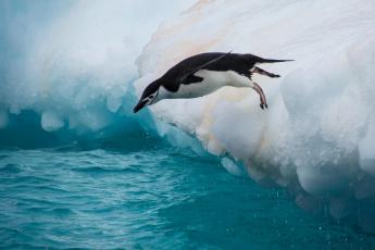 обоя животные, пингвины, антарктический, пингвин, птица, прыжок, льдина, вода