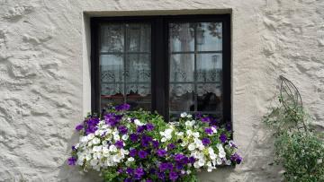 обоя цветы, петунии,  калибрахоа, цветочный, окно, ящик