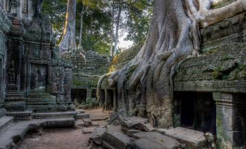 обоя cambodia angkor, города, - исторические,  архитектурные памятники, cambodia, angkor, камни, старина, памятник, культура, архитектура, дерево, корни