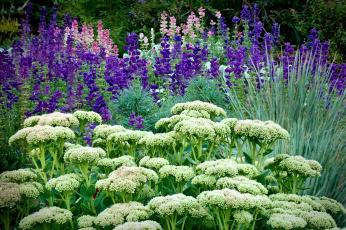 Картинка цветы разные вместе травы каланхоэ