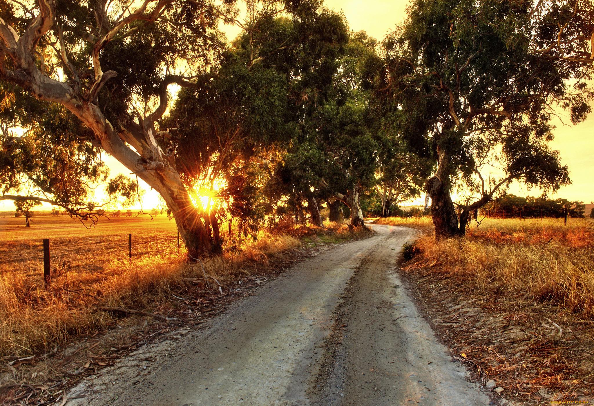 Пейзаж дорога деревья бесплатно