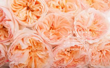 обоя календари, цветы, розы