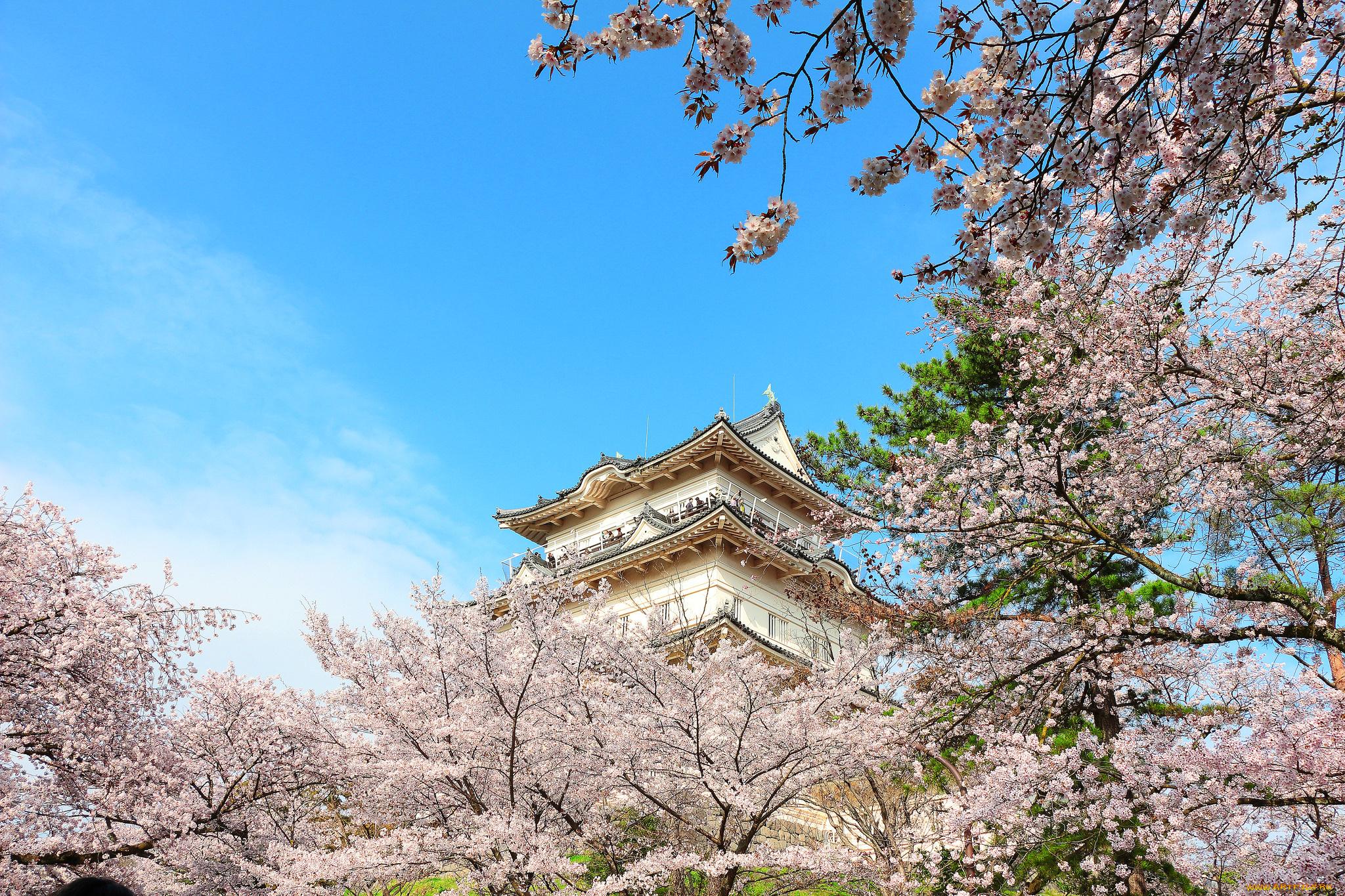 Замок Осака Япония сакура  № 3700640  скачать