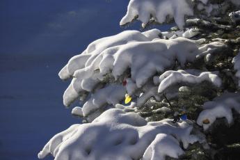 обоя праздничные, - разное , новый год, елка, снег, гирлянды, новый, год