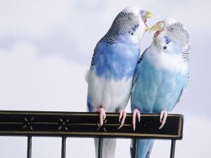 Картинка животные попугаи