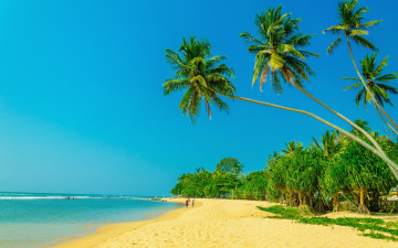Картинка природа тропики paradise пальмы tropical sand beach summer песок shore берег море пляж palms sea